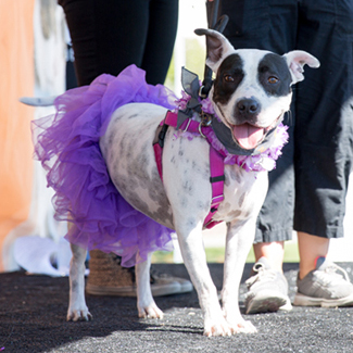 Register for Strut Your Mutt