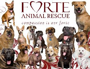 Strut with Forte and save more lives!