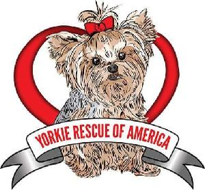 2018 Los Angeles Strut Your Mutt Yorkie Rescue Of America Best