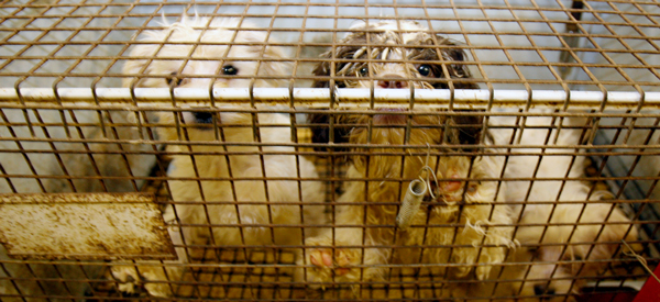 Puppy Mill Image Legislative Alert