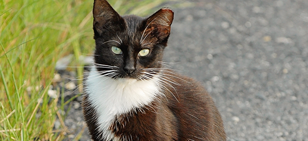 Community Cat Image Legislative Alert