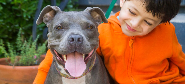 Pit Bull Image Legislative Alert