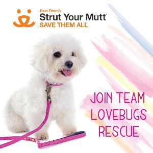 Join Team Lovebugs to save more lives!